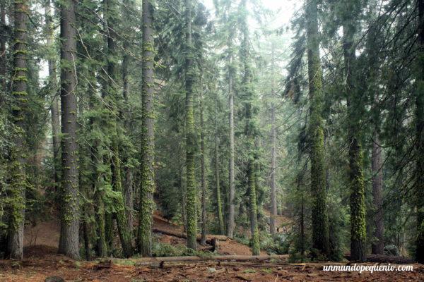 Bosque con enredaderas