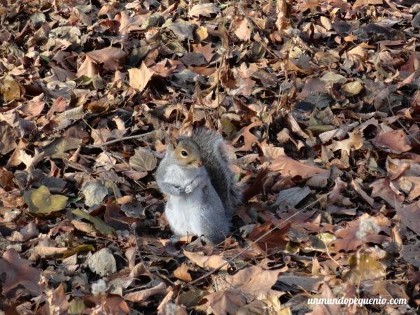 Ardilla en el Central Park
