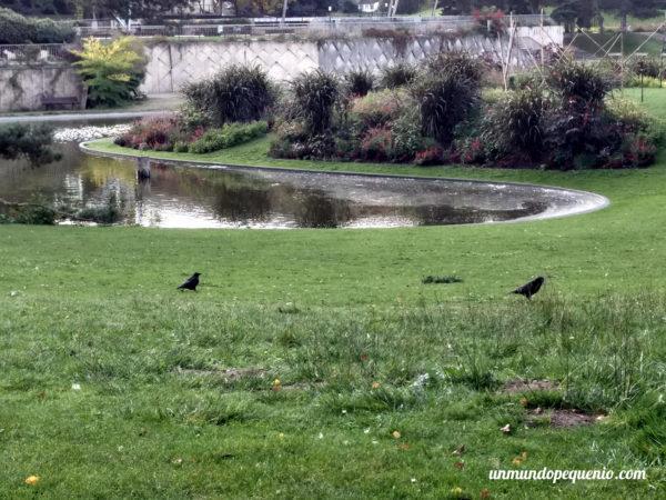 Pájaros en el Parc Floral de Paris