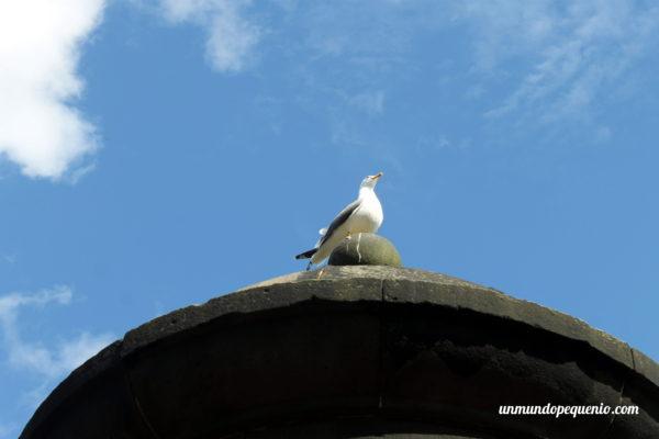 Gaviota tomando sol en el Castillo de Edimburgo