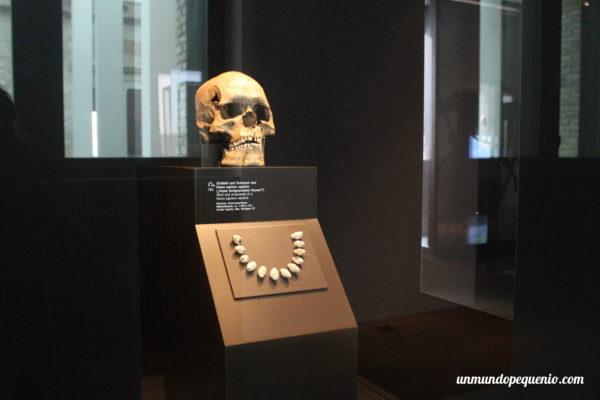 Cráneo de Homo Sapiens de Combe Capelle