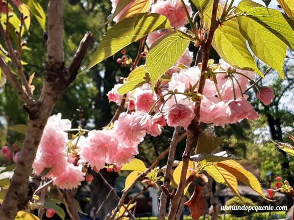 Cerezo en el Jardín Japonés